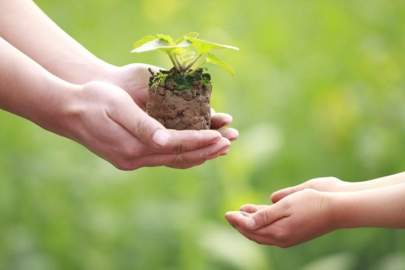 Mơ thấy trồng cây đánh con gì? Điềm báo giấc mơ là gì?