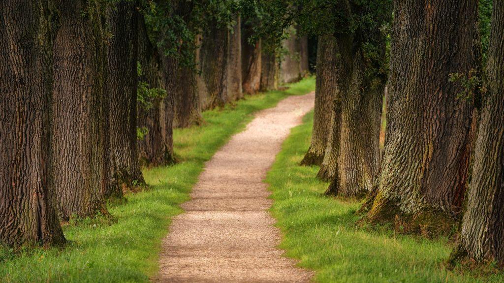 Mơ thấy một con đường là điềm báo gì? Giải mã giấc mơ