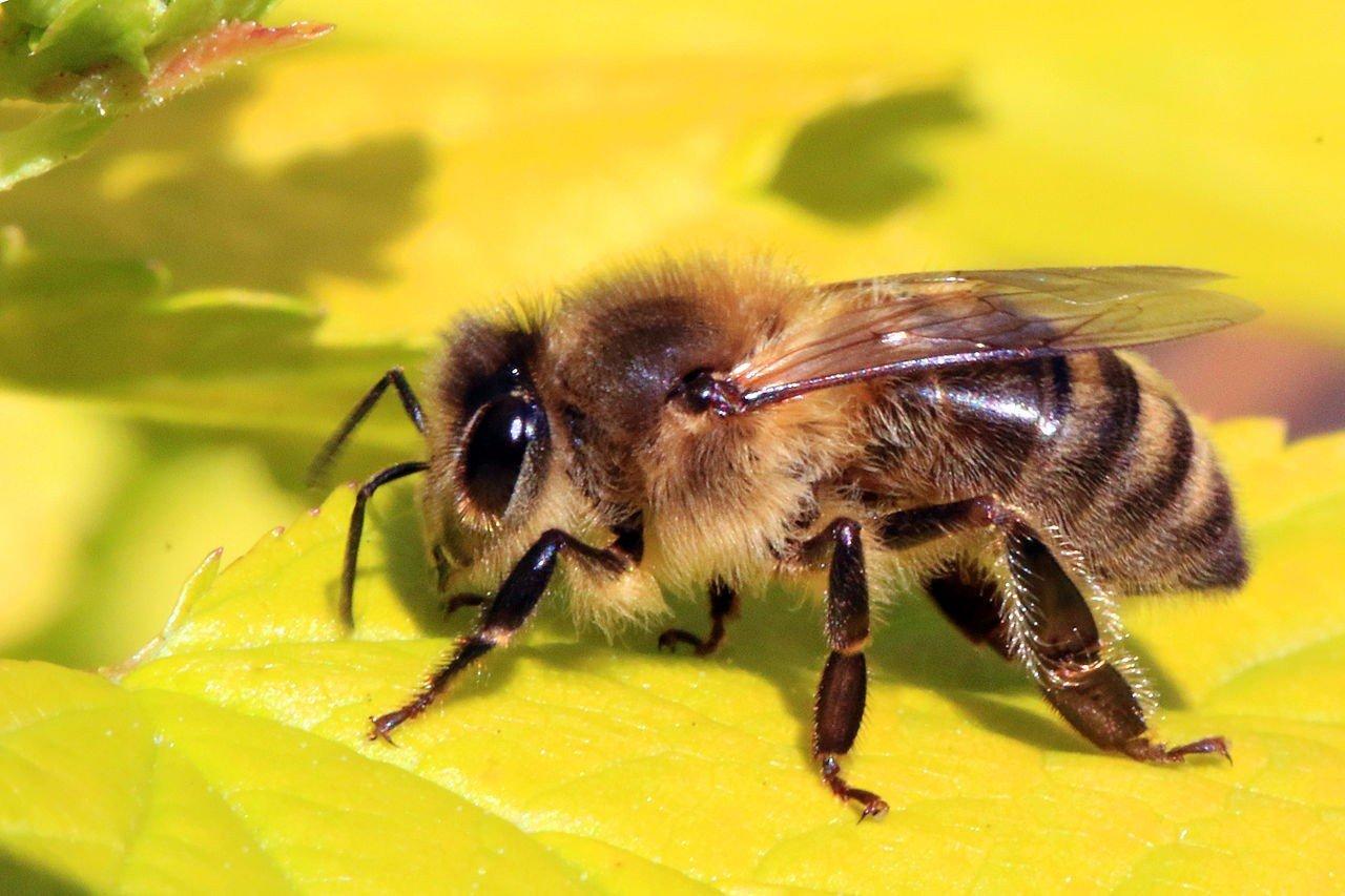 Con số may mắn, tài lộc khi mơ thấy ong mà bạn không nên bỏ qua