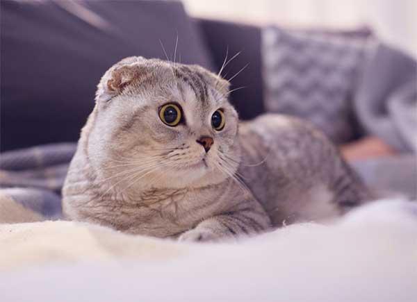Mơ thấy mèo là điềm báo tốt lành hay đen đủi ? Nên đánh lô gì?