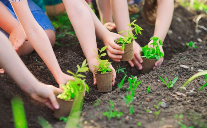 Ngủ mơ thấy trồng cây là điềm báo gì? Nên đánh lô con gì?